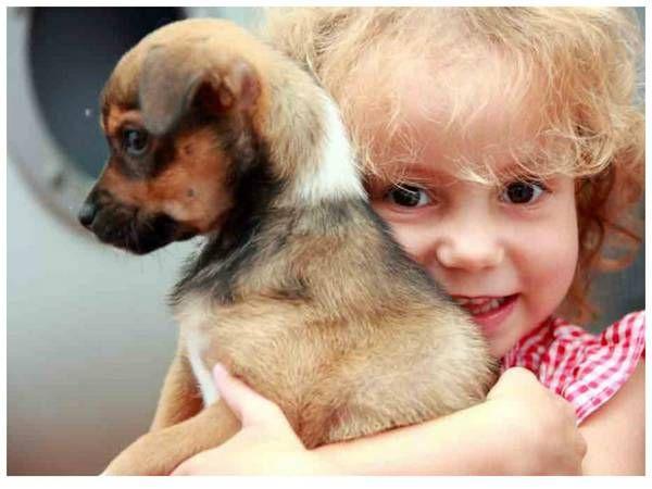 Симптоми алергії на собаку у дитини і її лікування